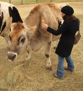 Nature Travel: Visiting a beautiful rescued cow at Farm Sanctuary