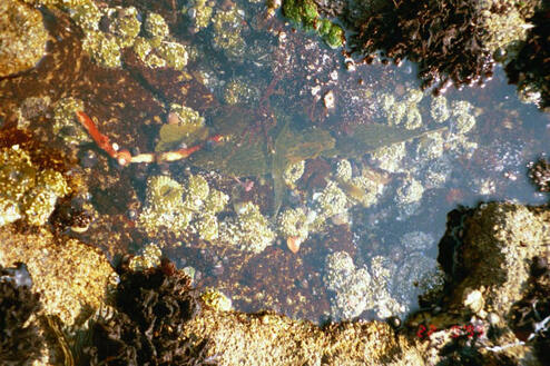 Nature lover's Valentine's gift: A day tidepooling is a perfect gift for a nature lover